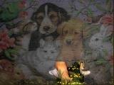 Loveable Pets Jogsaw Puzzle