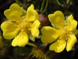 Цветочный пазл