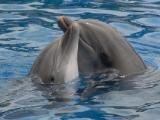 flash игра Пазлы: Дельфины
