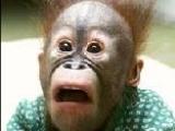 Jig Saw Puzzle: Monkey