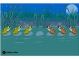 flash игра 6 лягушек