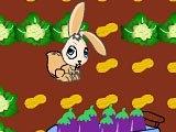 Кролик на ферме