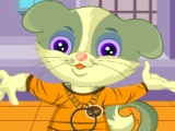 My Cat Jerry