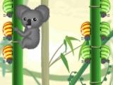 Koala vs Bugs
